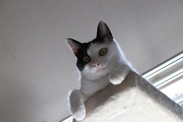 cat-3587525_640